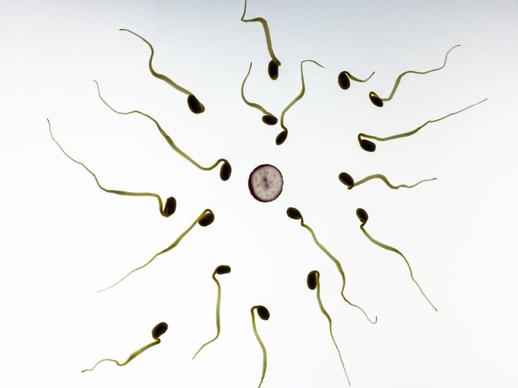 Spermamenge auf natürliche Art erhöhen